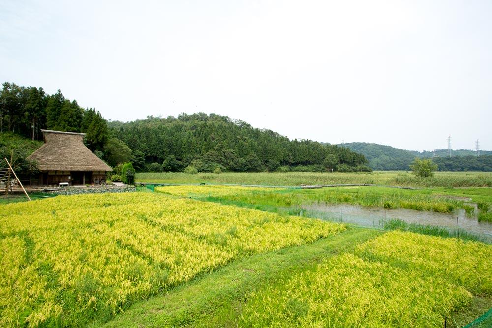 画像:中池見湿地